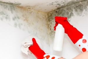 Why You Should Stop Using Bleach to Clean Mold in Your Home