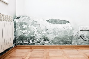 4 Easy Ways to Eliminate Moisture in Your Home