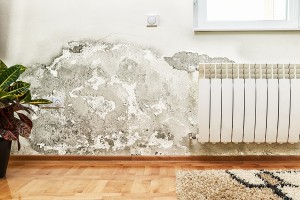 3 Warning Signs of Mold in Your Home