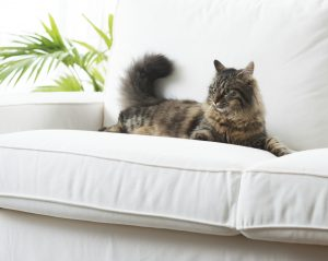 How Mold Can Negatively Affect the Health of Your Pets