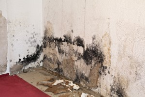 How to Get Rid of Musty Mold Odor in Your Home