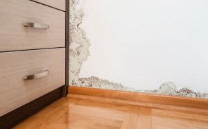 5 Unexpected Locations of Mold Growth in Your Home